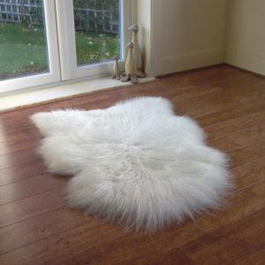 islandska biela ovcia kozusina 2